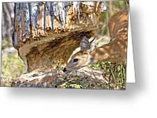 Beaver Wannabe Greeting Card