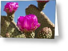 Beavertail Cactus Blossom 2 Greeting Card by Kelley King