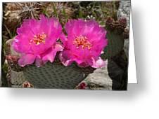 Beavertail Cactus Flowers Greeting Card