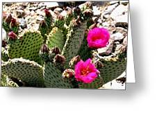 Beavertail Cactus Greeting Card