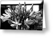 Becoming Beautiful - Bw Greeting Card