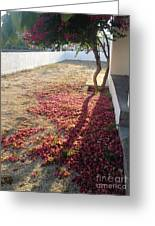 Bed Of Bougainvillea Greeting Card