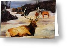 Bedded Down   Bull Elk In Snow Greeting Card