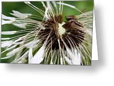 Bedraggled Dandelion Greeting Card