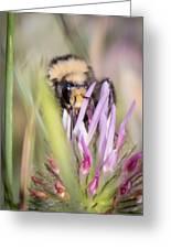 Bee 3 Greeting Card