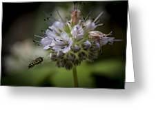 Bee 4 Greeting Card