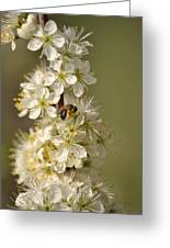 Bee And Blossoms Greeting Card