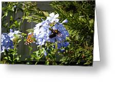 Bee And Butterfly II Greeting Card