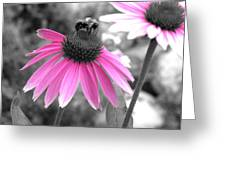 Bee And Cone Flower Greeting Card