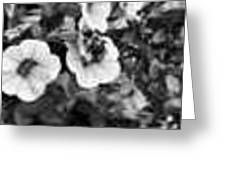 Bee And Flowers, Bw Greeting Card