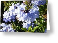 Bee And Flowers IIi Greeting Card