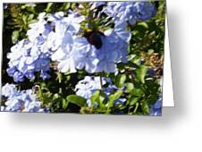 Bee And Flowers Iv Greeting Card
