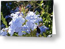 Bee And Flowers V Greeting Card