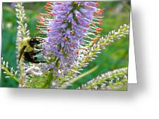 Bee And Its Lavender Delight Greeting Card