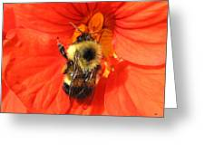 Bee And Nasturtium Greeting Card