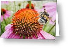 Bee And Pink Flower Greeting Card