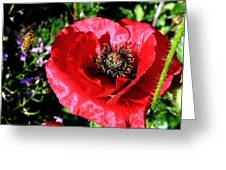 Bee And Red Poppy Greeting Card