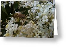 Bee And Small White Blossoms 2 Greeting Card