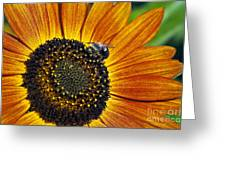 Bee And Sunflower. Greeting Card
