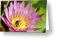 Bee And The Lily Greeting Card