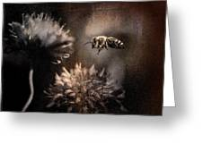 Bee Approaching Red Clover Blossom Greeting Card