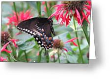 Bee Balm Butterfly Greeting Card