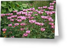 Bee Balm Garden Greeting Card