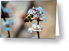 Bee Blossom Greeting Card