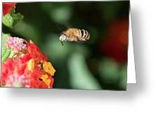 Bee, Bumblebee, Flying To A Flower, In Marseille, France Greeting Card