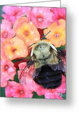 Bee Card Greeting Card