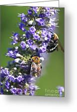 Bee Cause Greeting Card