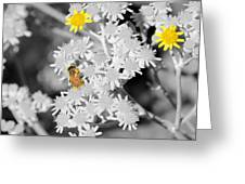 Bee Colored Greeting Card