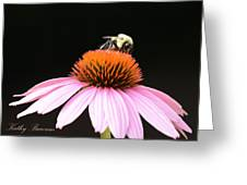 Bee Coneflower Greeting Card