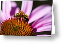 Bee Feasting Greeting Card