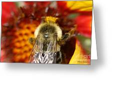 Bee Five - Greeting Card