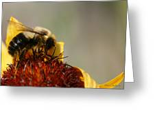 Bee Four Greeting Card