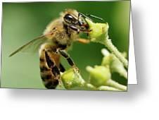 Bee Gathering Nectar Greeting Card