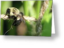 Bee Hanging Onto Twine Glistening In Sunlight After Working Greeting Card