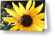 Bee Haven Greeting Card