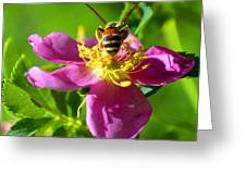 Bee Here Now Greeting Card