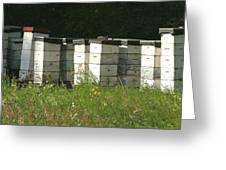Bee Hives In A Farmer's Field Greeting Card