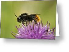 Bee I Greeting Card