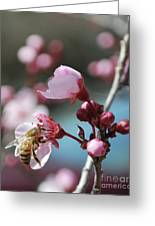 Bee In A Blossom Greeting Card