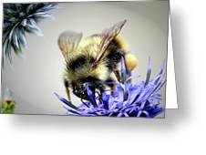 Bee In A Bubble Greeting Card