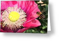 Bee In A Flower Greeting Card