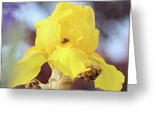 Bee In An Iris Bloom Greeting Card by Ann E Robson