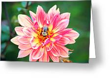 Bee In The Center Greeting Card