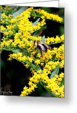 Bee In The Rawweed Greeting Card