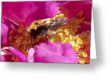 Bee In The Rugosa Greeting Card