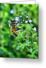 Bee Is In The Oregano Greeting Card